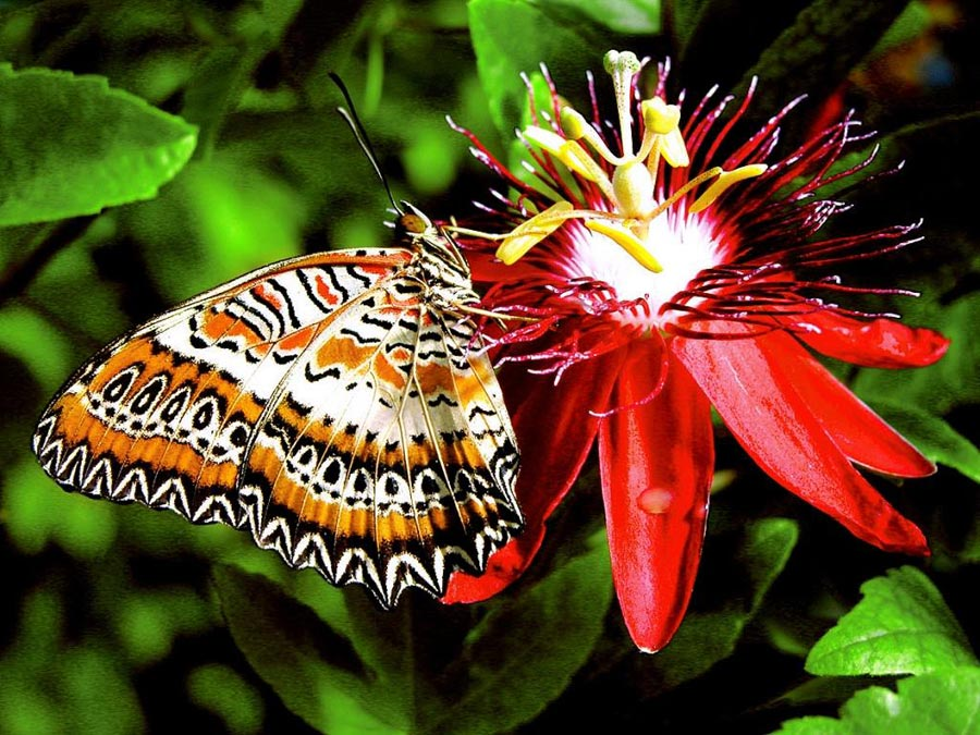 Download image Mariposas Im Genes De Fotos PC, Android, iPhone and ...